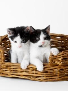 Два милых котенка лежат в корзинке, ну как же хочется их взять на руки