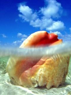 Картинка снята из под воды. Скачав эту тему, вы увидите огромную ракушку и небо